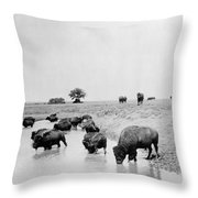 Yellowstone: Bison, C1905 Throw Pillow