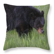 Yellowstone Black Bear Grazing Throw Pillow