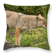 Yellowstone Coyote Scout Throw Pillow