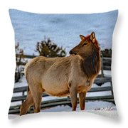 Yellowstone Elk Throw Pillow