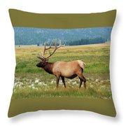 Yellowstone Elk Throw Pillow