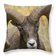 Yellowstone Ram Throw Pillow
