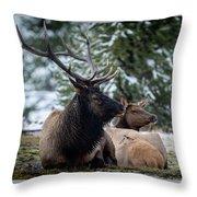 Yellowstone Wild Throw Pillow