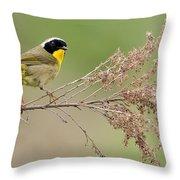 Yellowthroat Warbler Throw Pillow