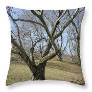 Yellowwood Tree In Winter Throw Pillow