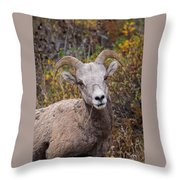 Yes? Throw Pillow