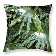 Yes Snow In Florida Throw Pillow