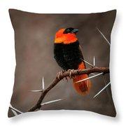 Yikes Spikes - Red Bishop Weaver Bird Throw Pillow