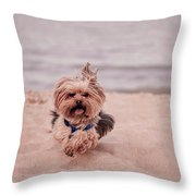 York Dog Playing On The Beach. Throw Pillow