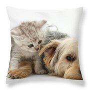 Yorkshire Terrier And Tabby Kitten Throw Pillow