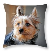 Yorkshire Terrier Dog Pose #3 Throw Pillow