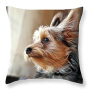 Yorkshire Terrier Dog Pose #5 Throw Pillow
