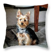 Yorkshire Terrier Dog Pose #6 Throw Pillow