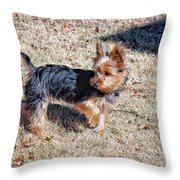 Yorkshire Terrier Dog Pose #9 Throw Pillow