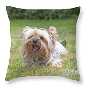 Yorkshire Terrier Is Smiling At The Camera Throw Pillow