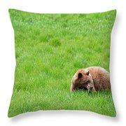 Yosemite Bear Throw Pillow