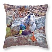 You Go First - Male And Female Mallard Ducks Throw Pillow