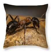 You Lookin' At Me? Throw Pillow