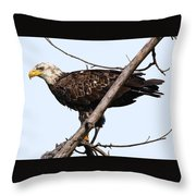 Young Adult Eagle Throw Pillow