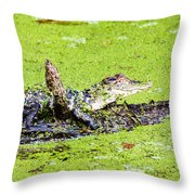 Young Alligator On A Log Throw Pillow