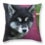 Young Alusky Puppy Standing On A Teeter Totter Throw Pillow