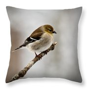 Young American Golden Finch 1 Throw Pillow