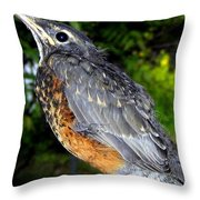 Young American Robin Throw Pillow