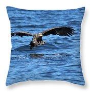 Young Bald Eagle I Throw Pillow
