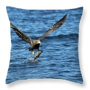 Young Bald Eagle II Throw Pillow