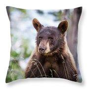 Young Black Bear Throw Pillow