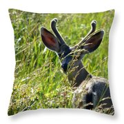 Young Black-tailed Deer With New Antlers Throw Pillow