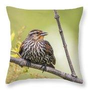 Young Blackbird Throw Pillow