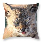 Young Bobcat 04 Throw Pillow