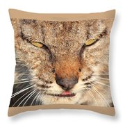 Young Bobcat Portrait 01 Throw Pillow