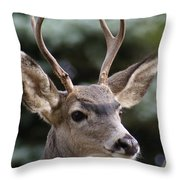 Young Buck Throw Pillow