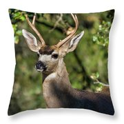 Nature's Vignette Throw Pillow