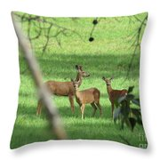 Young Buck With Two Does In The Meadow Throw Pillow