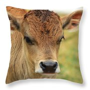 Young Calf In A Pasture Throw Pillow