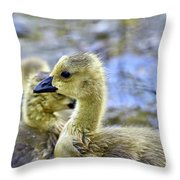 Young Canadain Goose Throw Pillow