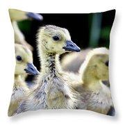 Young Canadian Goose Goslings Throw Pillow