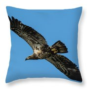 Young Eagle Color Throw Pillow