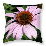 Young Echinacea Bloom Throw Pillow