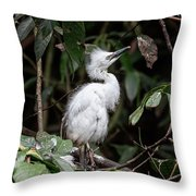 Young Egret Costa Rica Throw Pillow