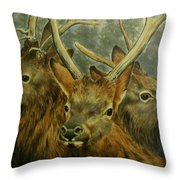 Young Elk Trio- Wapiti Throw Pillow