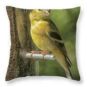 Young Goldfinch Throw Pillow