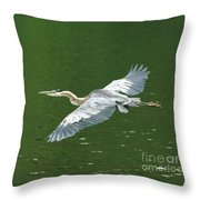 Young Great Blue Heron Taking Flight Throw Pillow