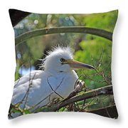 Young Great Egret Throw Pillow