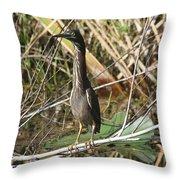 Young Green Heron  Throw Pillow