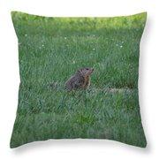 Young Groundhog Throw Pillow