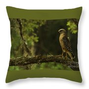Young Hawk Throw Pillow